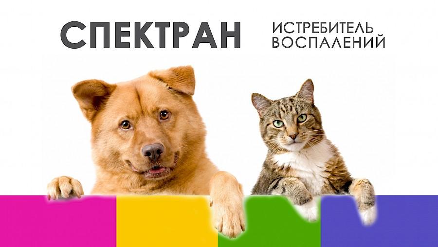 Инъекции для суставов кошек и собак как лечить кальциноз суставов